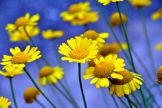 bloemen - Pesquisa Google
