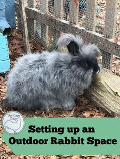 Setting up your rabbit area outdoors allows your rabbits to live a more natural life with lots of room to run and dig. But it's very important to take precautions to keep your bunnies safe an… Meat Rabbits, Raising Rabbits, Rabbit Fence, Rabbit Habitat, Outdoor Rabbit Hutch, Rabbit Enclosure, Bunny Cages, Rabbit Cages, Bunny Hutch