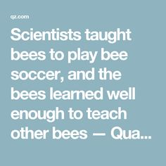 Scientists taught bees to play bee soccer, and the bees learned well enough to teach other bees — Quartz