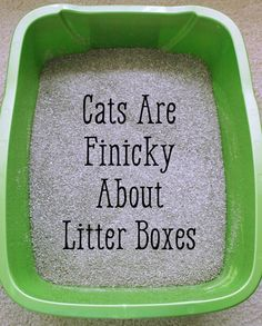 Cat urine is one of the strongest & most tenacious smells there is. If a cat pee… - CAT SUPPLIES Remove Cat Urine Smell, Cat Pee Smell, Cat Urine Smells, Remove Stains, Cleaning Cat Urine, Stop Cats From Peeing, Cat Peeing In House, House 2, Cat Urine Remover