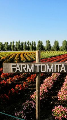 Farm Tomita in Furano, Hokkaido, Japan Places Around The World, Around The Worlds, Furano, Asian Design, Farms Living, Wonderful Places, Outdoor Activities, Dead Gorgeous, Beautiful
