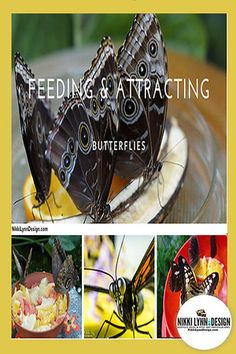 Let's explore some of the things that they would eat. This will help you with feeding and attracting butterflies to your yard. Nikki Lynn, Nectar Recipe, How To Attract Birds, Butterflies, Bees, Humming Birds, Explore, Dragonflies, Crafts