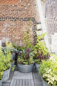 Rooftop Garden - love these metal huge pots - great for herbs or veggies