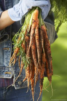 While straight carrots might not taste any better than crooked or forked ones, they sure are easier to harvest and handle in the kitchen—not to mention a better sell at market.