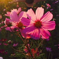 💖 Valmennusryhmään pääsee ilmoittautumaan mukaan vielä tänään! 💖 Tartu rohkeasti unelmiesi elämään, investoi itseesi ja omaan onnellisuuteesi! Vannon, että et tule katumaan! 😘  Linkki biossa 🌟 . . . . #viimeinentilaisuus #ilmoittaudu #unelmavalmennus #vielätänään #huomennaonmyöhäistä #ovetsulkeutuu Plants, Instagram, Plant, Planets