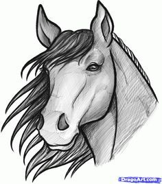 horses face drawings - Google Search