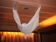 Bird - like being on a carnival cruise!