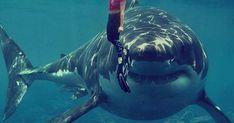 Dünyanın En Ölümcül Canlıları Whale, Animals, Africa, Animales, Whales, Animaux, Animal, Animais