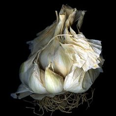 Could this be a scanogram? I love the shallow depth of field and sculptural quality of the garlic.