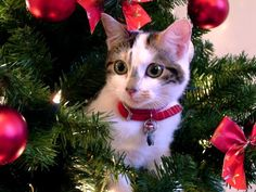 chilli_tree by pixel_bettie, via Flickr