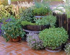 A barrel-on-barrel herb tower, a great way to grow plenty of herbs in a small space.