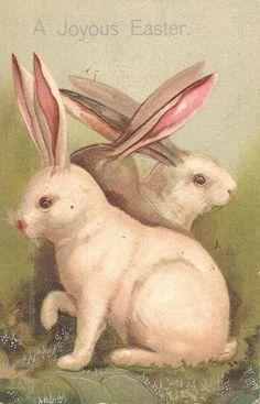 Vintage Easter card. white rabbits.