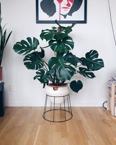 I really like my monstera in this pot. But when I looked closer it have started to crack and shatter in the edges all the way around. If you want to make a self watering pot make sure it wont disintegrate in water! House Plants Decor, Plant Decor, Plantas Indoor, Self Watering Pots, Small Space Interior Design, Home Design, Flower Pot Design, Decoration Plante, Inside Plants