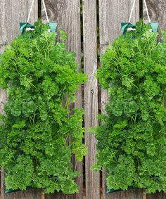 Look what I found on #zulily! Organic Italian Parsley Hanging Garden #zulilyfinds