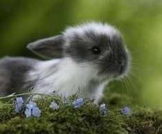 Bunny in bluebells