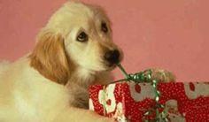 fiestas de cumpleaños para perros