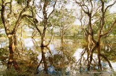 #107 - Sandbar, Myall Lakes National Park, New South Wales, Australia