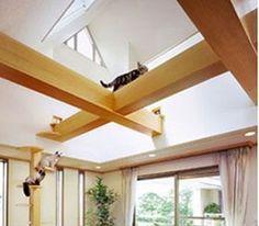 Cat rafters:) #cats #CatClimb
