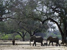 #zimbabwe #wilderness #wildlife #elephants