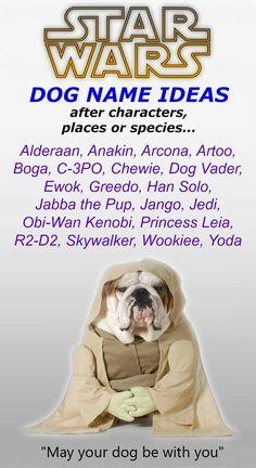 dog baby name in english