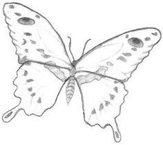butterflies drawings | Butterfly Drawings