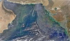 Picture of concentrations of phytoplankton in the Arabian Sea
