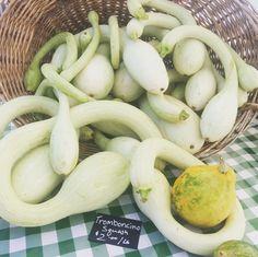 What's In Season | Texas Farmers Market