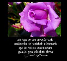 Rosas Humildade Harmonia