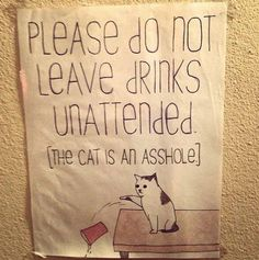 Warnung vor dem Arschloch | Do not leave drinks unattended | Cat