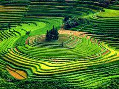 Inovar Tour www.inovartour.com.br : Plantação de arroz no Vietnã.