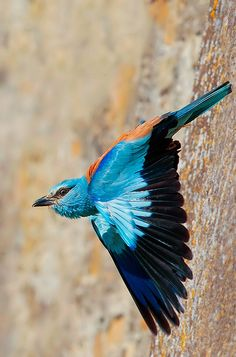 <3 Colorful Birds of the World <3