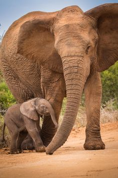 We match you with top tour companies that specialize in the trip you want, whether it's a customized private tour or a group tour. Cute Baby Elephant, Elephant Art, African Elephant, African Safari, Cute Baby Animals, African Animals, Funny Animals, Baby Elephants, Elephant Family