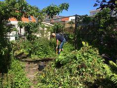 overwoekerde tuin leeg maken