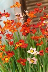 Great offers & range of Flowers & Plants, Vegetable Plants, Vegetable & Flower Seeds & Seed Potatoes plus Wild Bird Food and Gardening Accessories from Marshalls. Wild Bird Food, Wild Birds, Planting Vegetables, Bulb Flowers, Garden Accessories, Flower Seeds, Bulbs, Plants, Google Search