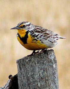 """IMG_6951″ by rachaellivingstone | Colorful Birds #Photography Contest Winners - ViewBug.com"