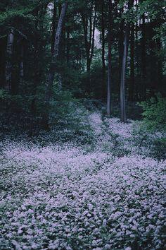 nature & vintage blog