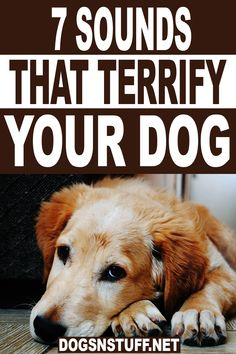 The ears of a dog are far more sensitive than those of people, so some noises may seem a lot louder to them than they do to us. Here are 7 Sounds That Terrify Your Dog! #dogtips #dogcare #dogcare #doghacks Online Dog Training, Training Your Dog, Baby Animals Pictures, Cute Animals, Strange Noises, Dog Hacks, Dog Behavior, Pet Store, Little Dogs
