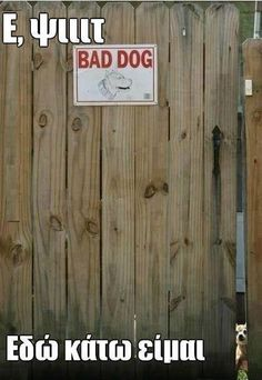 Beware of Dog with Napoleon Complex - Big Scary Bark In Little Tiny Body ---- hilarious jokes funny pictures walmart humor fails Cute Funny Animals, Funny Animal Pictures, Funny Cute, The Funny, Funny Dogs, Fail Pictures, Cute Dog Pictures, Funny Photos, Humor Animal