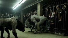 Its a dog fight!!