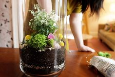 nicole-balch-west-elm-terrarium-mothers-day-diy-project-plant-gift-cute-making-lovely-decorative-touches-whimsical-pink-pyrite-agate-billy-button