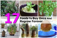 17 Foods To Buy Once And Regrow Forever #gardening, #planting, #vegetable, #regrow