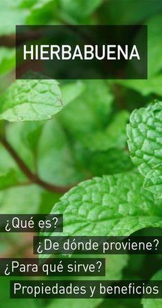 Hierbabuena : propiedades, beneficios para la salud, efectos secundarios y dosis recomendada Fruit Benefits, Health Benefits, Tea Benefits, Natural Medicine, Herbal Medicine, Salud Natural, Herb Seeds, Natural Health Tips, Fruit Plants
