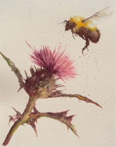 ARTFINDER: Bumble Bee Scottish Thistle by Teresa Tanner - Loose watercolour with pink/purple Thistle & visiting Bumble Bee. One of a series of wildlife paintings depicting different wild & garden flowers. Mounted, b...