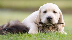 Gatti usati come cuscini da cani molto assonnati e dispettosi - Tgcom24