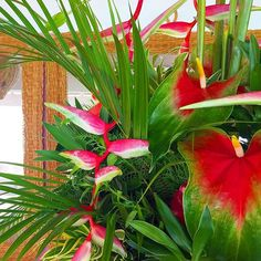 Exotic florals in our Camelot Restaurant.  #barbados #cobblerscove
