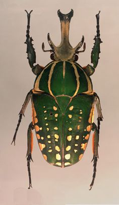 musee insecte levens entomologie