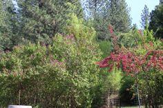 Colorful Blossoms Around the Estate