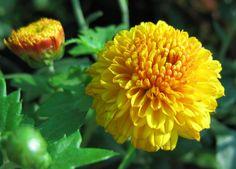 Yellow Flowers | File:Yellow Flowers (3).jpg - Wikimedia Commons