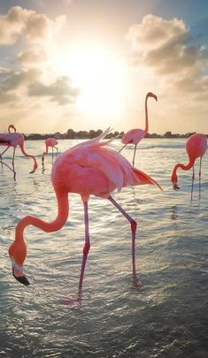 Flamingos on the beach! 💦 Thirsty in Aruba, Caribbean 🌴 Video and photos by Flamingo Beach, Flamingo Art, Pink Flamingos, Animals And Pets, Cute Animals, Pink Animals, Cool Pictures, Cool Photos, Aruba Pictures
