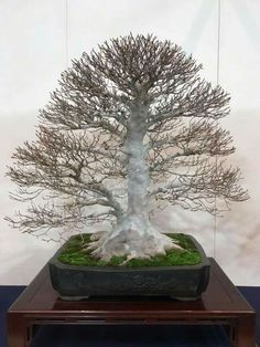 Bonsai Art, Bonsai Trees, Red Maple Bonsai, Dwarf Trees, Miniature Trees, Small Trees, Dandelion, Landscape, Flowers